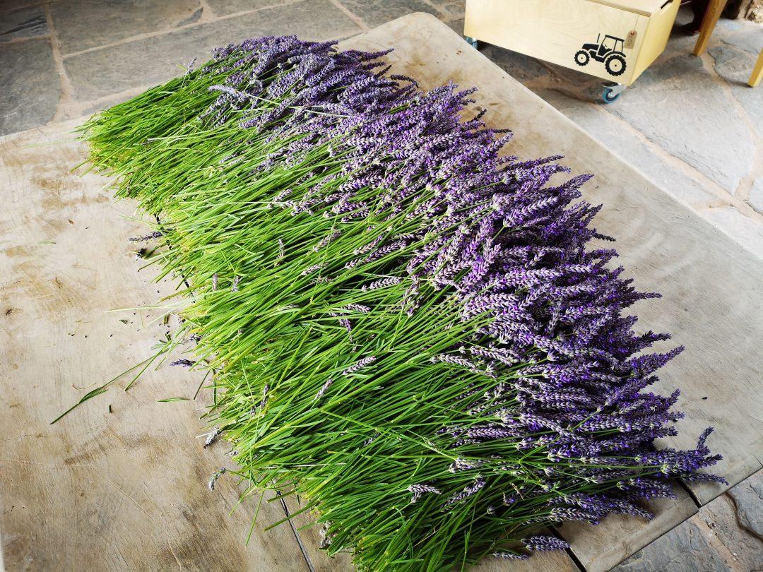 Welsh Lavender